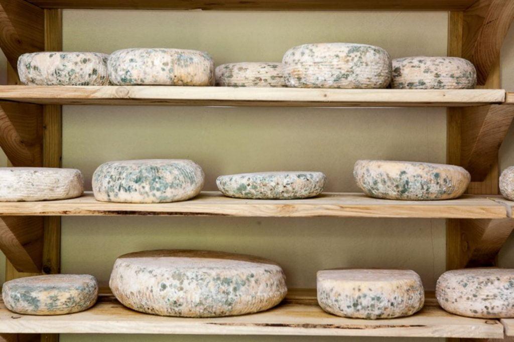 Green cheese Cherni Vit